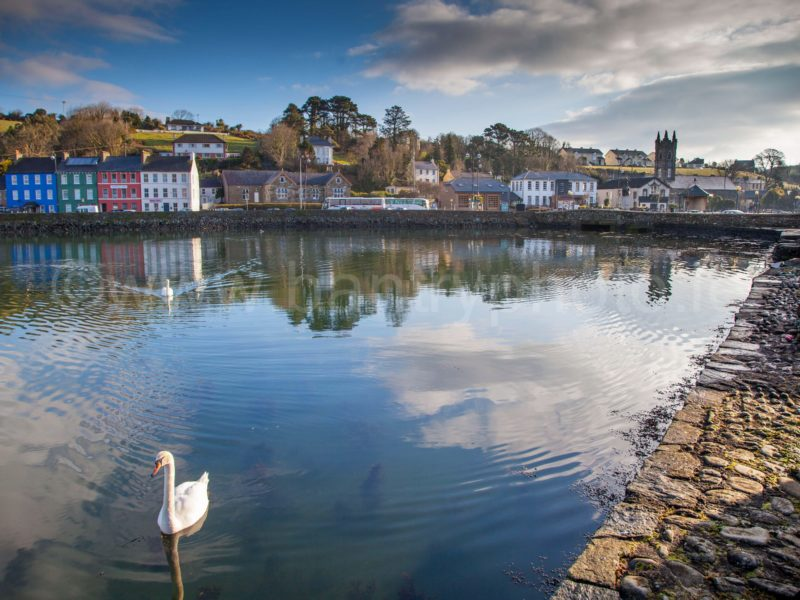 Bantry Harbour Swans